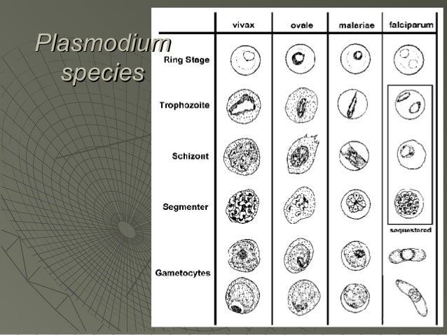 toxoplasma gondii a review of parasitology Toxoplasma gondii is a parasite of birds and mammals cats are the only definitive host and thus the only source of infective oocysts, but other mammals and birds can develop tissue cysts.