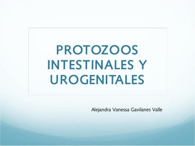 PROTOZOOSINTESTINALES Y UROGENITALES      Alejandra Vanessa Gavilanes Valle