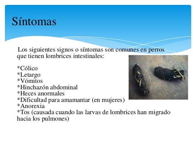 Las medicinas contra las larvas de las lombrices