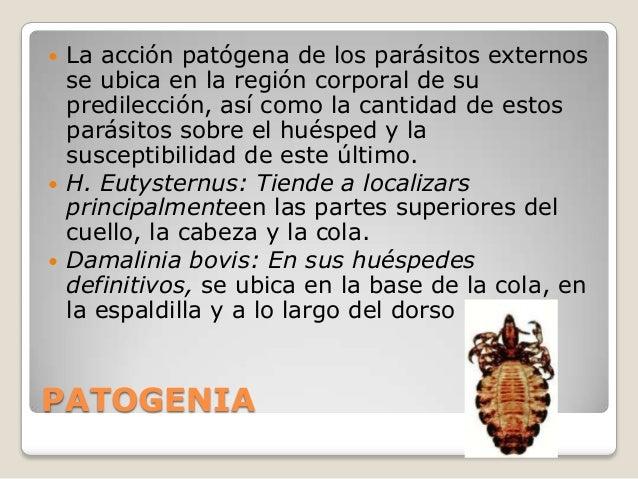 El contagio del organismo por los helmintos