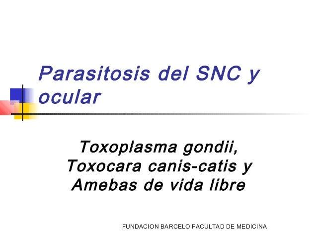 FUNDACION BARCELO FACULTAD DE MEDICINA Parasitosis del SNC y ocular Toxoplasma gondii, Toxocara canis-catis y Amebas de vi...