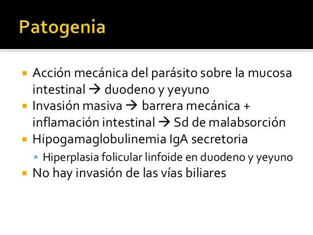 Parasitosis Humana David Botero Pdf Download