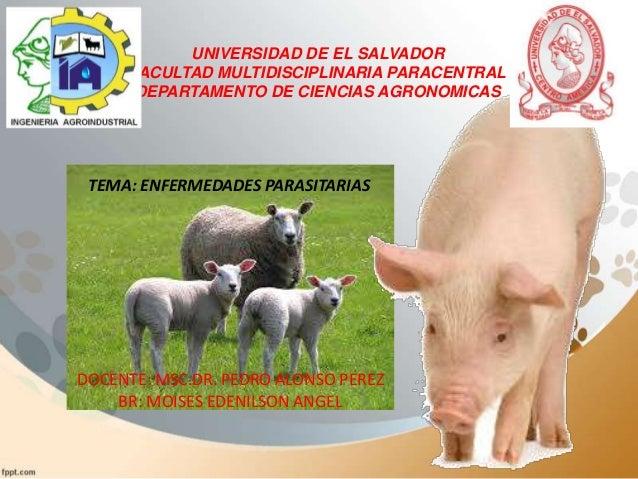 UNIVERSIDAD DE EL SALVADOR FACULTAD MULTIDISCIPLINARIA PARACENTRAL DEPARTAMENTO DE CIENCIAS AGRONOMICAS  TEMA: ENFERMEDADE...