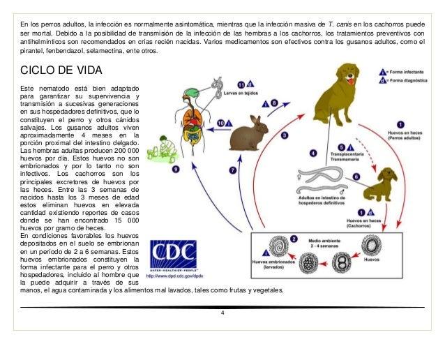 tratamiento para erlichia canis pdf