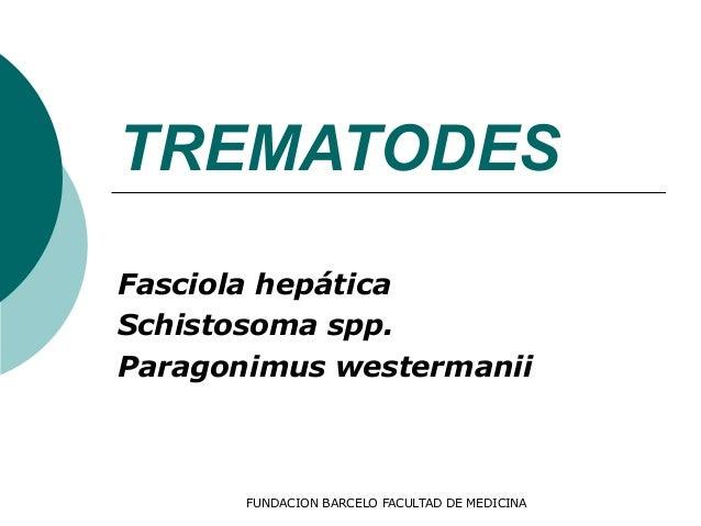 FUNDACION BARCELO FACULTAD DE MEDICINA TREMATODES Fasciola hepática Schistosoma spp. Paragonimus westermanii