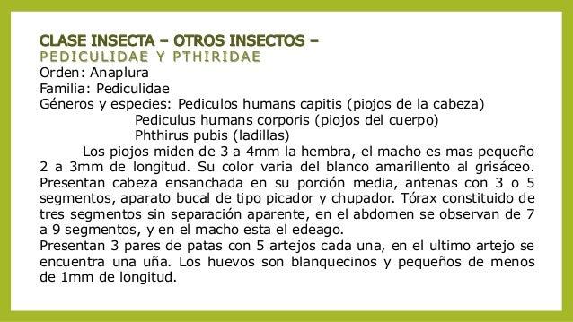 Las pastillas de las lombrices para los niños de 1.5 años