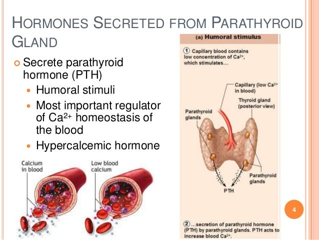 Parathyroid Gland and Disorders