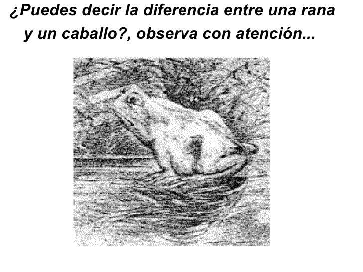 ¿Puedes decir la diferencia entre una rana y un caballo?, observa con atención...