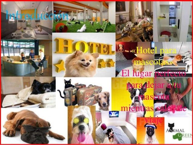 hotel para mascotas