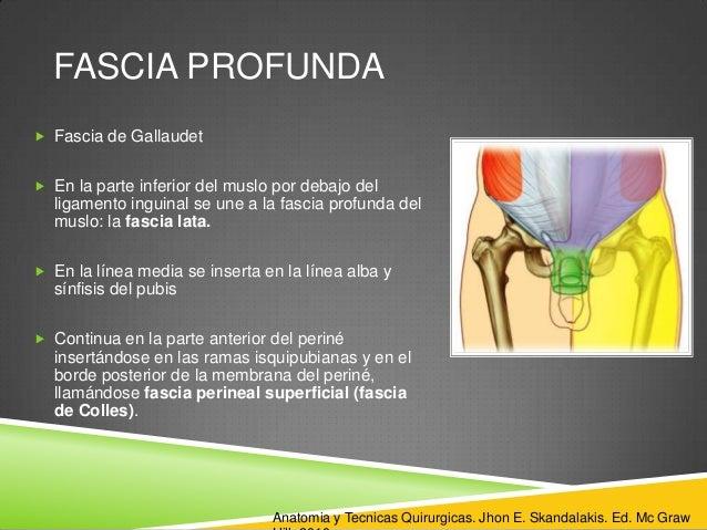 Abdominal Anatomia De Pared Hernias Y jq5R3AL4