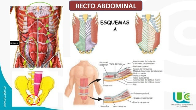 Pared abdominal y hernias