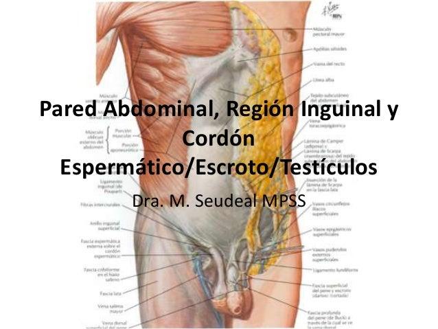 Pared Abdominal, Región Inguinal y Cordón Espermático/Escroto/Testículos Dra. M. Seudeal MPSS
