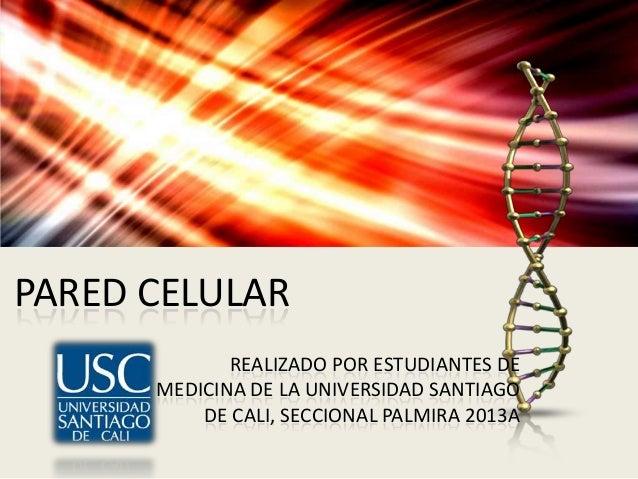 PARED CELULAR REALIZADO POR ESTUDIANTES DE MEDICINA DE LA UNIVERSIDAD SANTIAGO DE CALI, SECCIONAL PALMIRA 2013A
