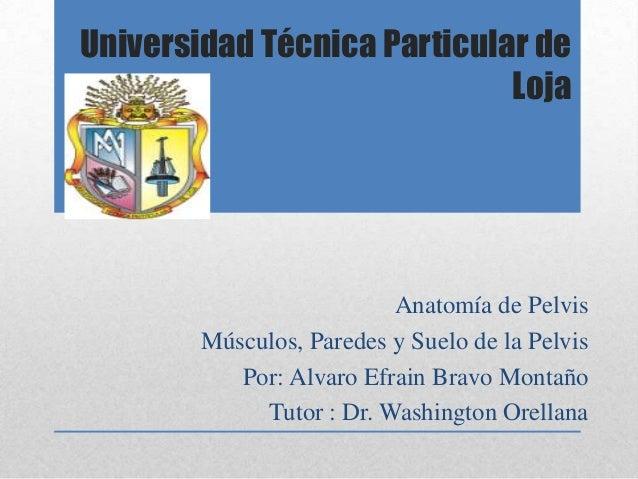 Universidad Técnica Particular de Loja  Anatomía de Pelvis Músculos, Paredes y Suelo de la Pelvis Por: Alvaro Efrain Bravo...