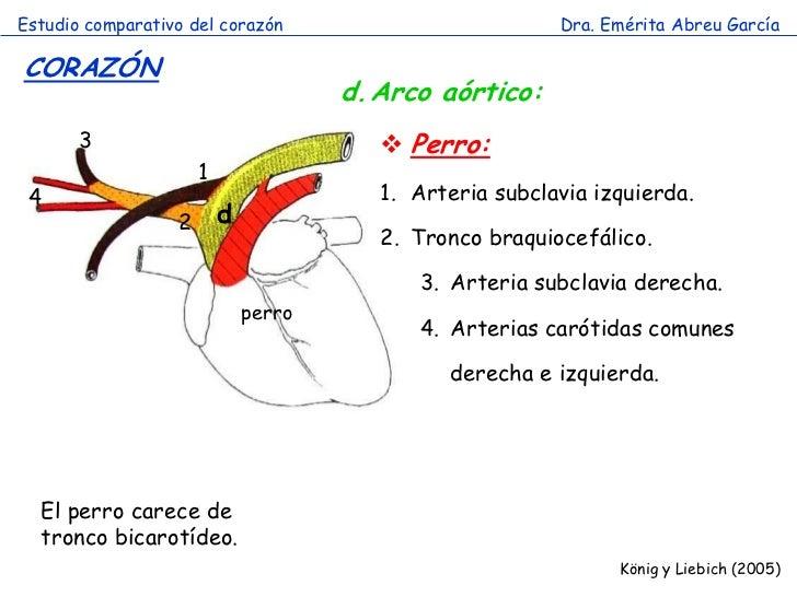 Estudio comparativo del corazón                           Dra. Emérita Abreu GarcíaCORAZÓN                                ...