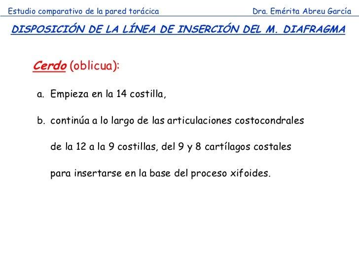 Estudio comparativo de la pared torácica                 Dra. Emérita Abreu GarcíaDISPOSICIÓN DE LA LÍNEA DE INSERCIÓN DEL...