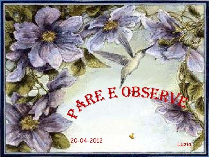 20-04-2012             Luzia