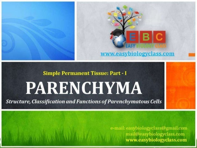 For detailed description of this topic, please click on: http://www.easybiologyclass.com/parenchyma-cells-in-plants-struct...