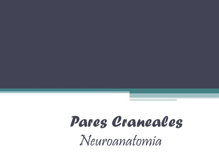 Pares Craneales Neuroanatomia