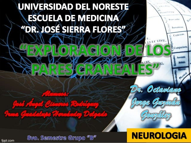 Sistema Nervioso Periférico PARES CRANEALES I.II.III.IV.V.VI.VII.VIII.IX.X.XI.XII.-  OLFATORIO. ÓPTICO. MOTOR OCULAR COMÚN...