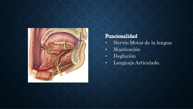 Pares Craneales - Semiología y anatomia