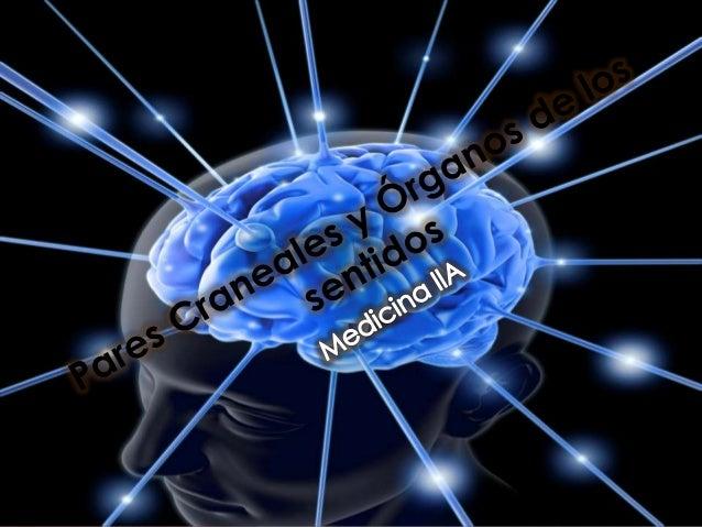 INTRODUCCIÓN  El examen neurológico de la cabeza y  el cuello difiere del examen desde el  cuello hacia abajo.  En el prim...