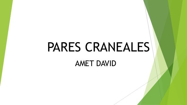 PARES CRANEALES AMET DAVID