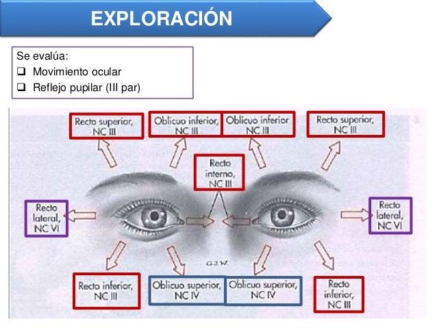 Pares craneales neurolog a for Cuarto par craneal