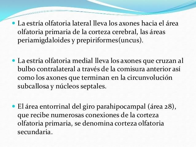 Interpretación:  Las alteraciones en la percepción olfativa pueden ser: – Cuantitativas: hiposmia (disminución), anosmia ...