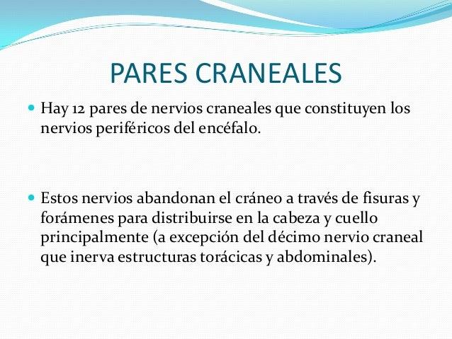 PARES CRANEALES  Hay 12 pares de nervios craneales que constituyen los nervios periféricos del encéfalo.  Estos nervios ...