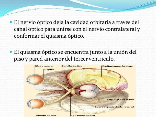 Exploración:  Agudeza visual Se examina cada ojo por separado (se permite que el paciente use sus gafas o lentes de conta...
