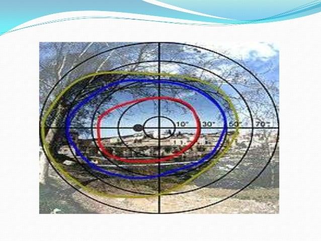 El núcleo oculomotor principal recibe las siguientes aferencias: 1) De ambos hemisferios cerebrales mediante fibras cortic...