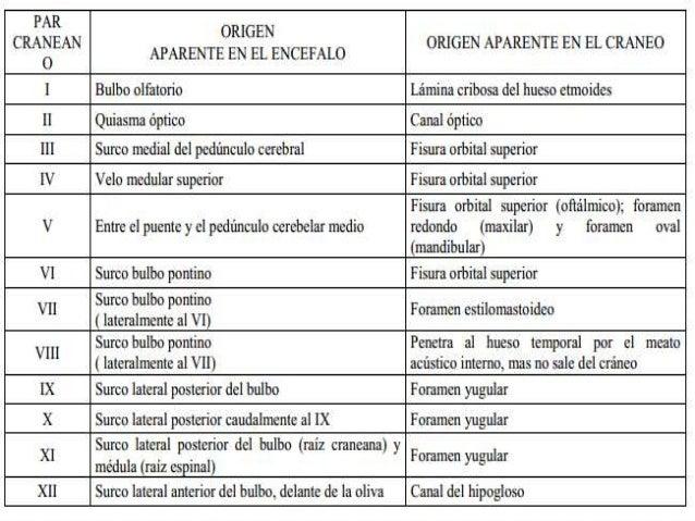 CLASIFICACION DE LOS NERVIOS CRANEALES Los componentes funcionales de los nervios craneales son:  Aferente somático gene...