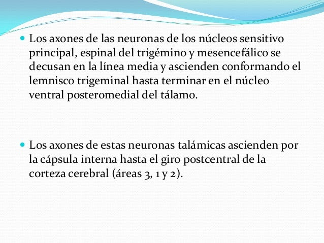  El núcleo abducente recibe aferencias:  1) de los hemisferios cerebrales mediante fibras corticonucleares.  2) de los ...