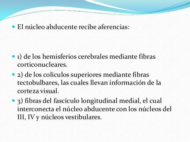 ANATOMIA, PATOLOGIA Y EXPLORACIÓN  DE PARES CRANEALES  (PRIMER PARTE)
