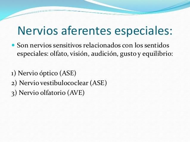 Nervios eferentes viscerales especiales  Son nervios motores que inervan los músculos branquioméricos y tienen función mi...