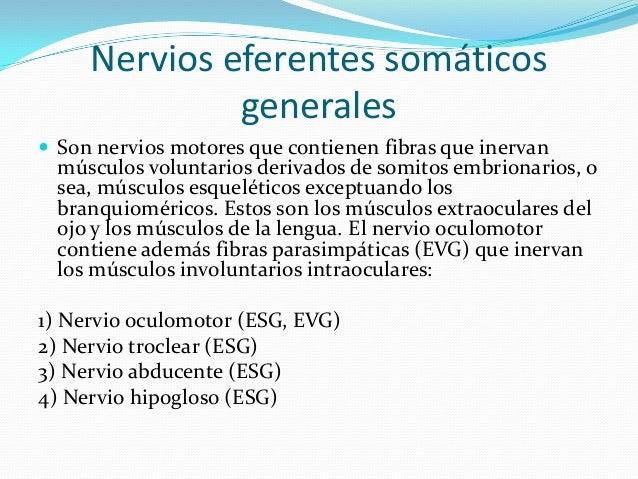 1er. PAR (NERVIO OLFATORIO)  Los nervios olfatorios se originan en las neuronas receptoras olfatorias que están en la muc...