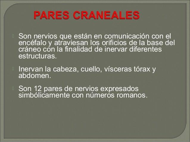 PARES CRANEALES Slide 2