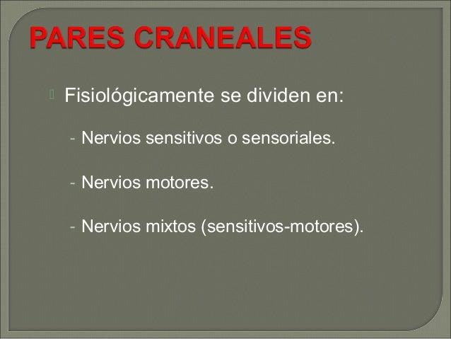 PARES CRANEALES Slide 3