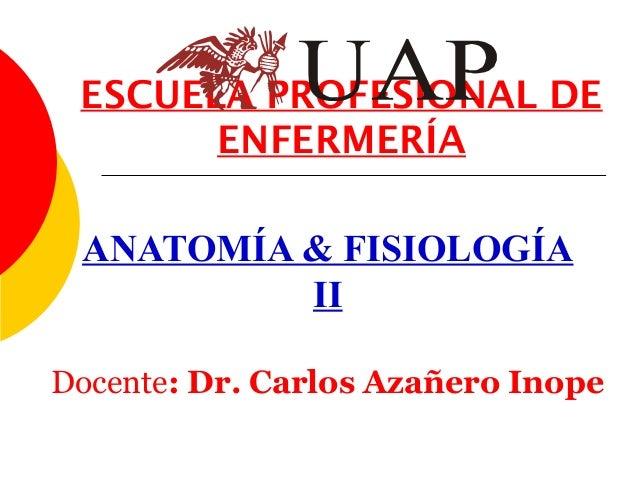 ESCUELA PROFESIONAL DE       ENFERMERÍA ANATOMÍA & FISIOLOGÍA          IIDocente: Dr. Carlos Azañero Inope