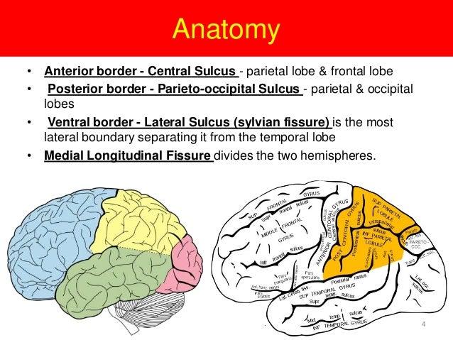 Parietal lobe tumor | 638 x 479 jpeg 106kB