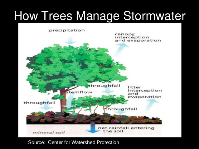 Parking Forest Stormwater Introduction