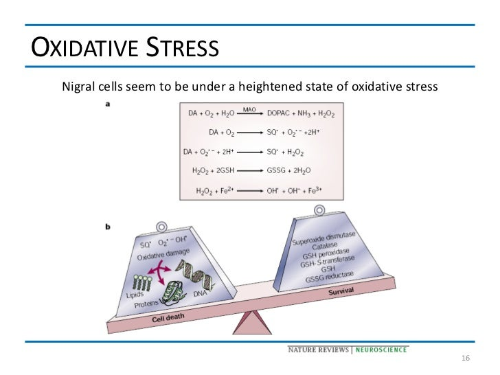 OXIDATIVE STRESS  Nigral cells seem to be under a heightened state of oxidative stress                                    ...