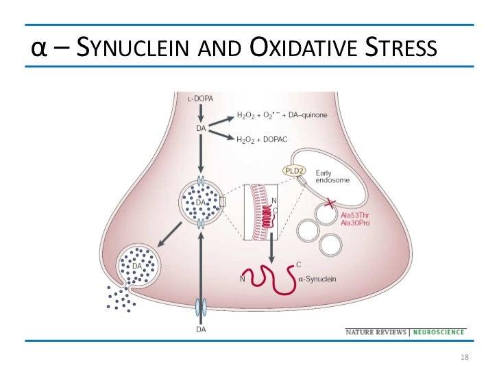 α – SYNUCLEIN AND OXIDATIVE STRESS                                     18