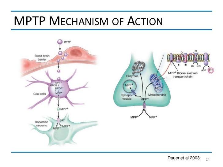 MPTP MECHANISM OF ACTION                           Dauer et al 2003   24