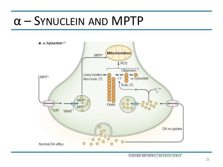 α – SYNUCLEIN AND MPTP                         25
