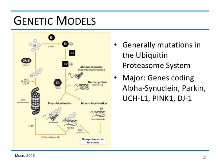 GENETIC MODELS                 • Generally mutations in                   the Ubiquitin                   Proteasome Syste...