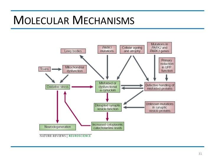 MOLECULAR MECHANISMS                       31