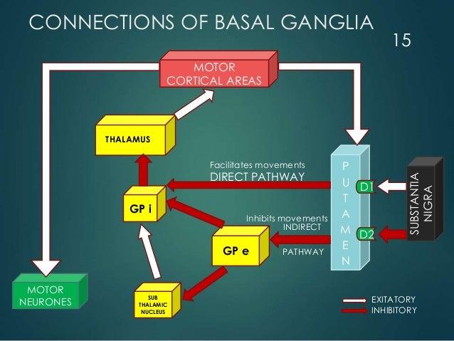 CONNECTIONS OF BASAL GANGLIA MOTOR CORTICAL AREAS MOTOR NEURONES GP e SUB THALAMIC NUCLEUS GP i P U T A M E N SUBSTANTIA N...