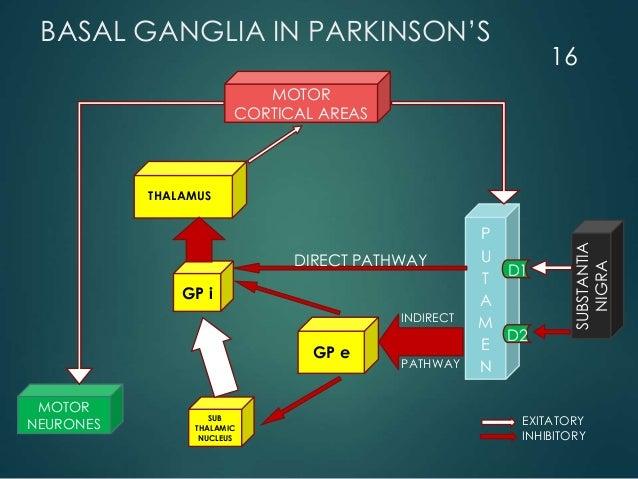 BASAL GANGLIA IN PARKINSON'S MOTOR CORTICAL AREAS MOTOR NEURONES GP e SUB THALAMIC NUCLEUS GP i P U T A M E N SUBSTANTIA N...